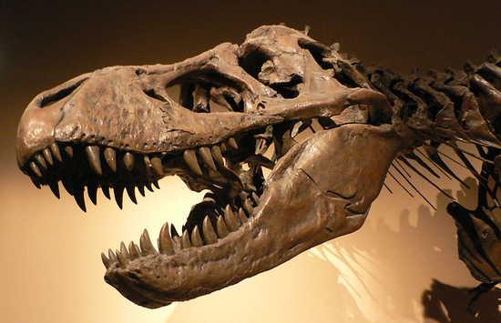 Tyrannosaurus_rex_p1050042